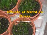 effects of metal on grass