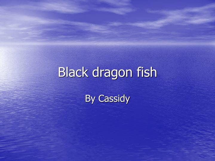 Black dragon fish