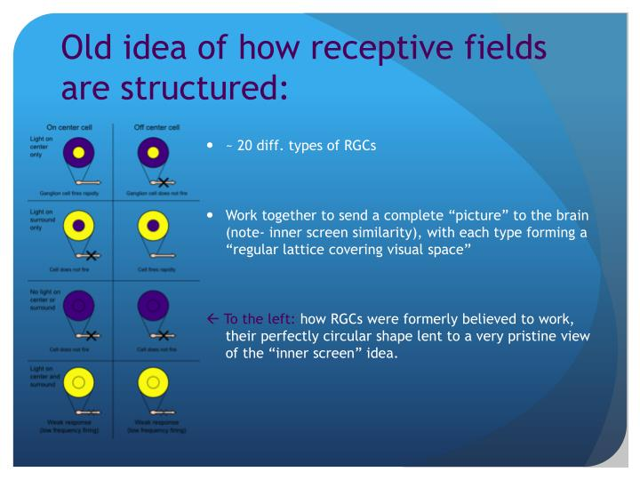 Old idea of how receptive fields are structured: