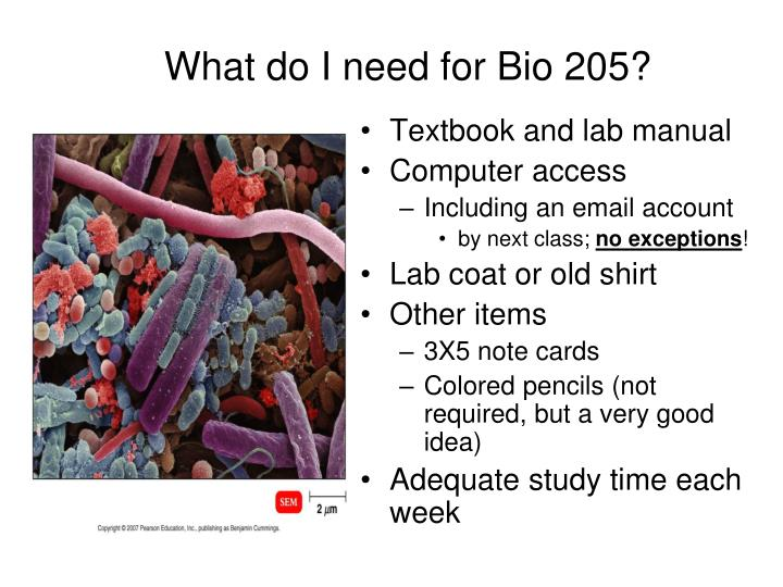 What do i need for bio 205