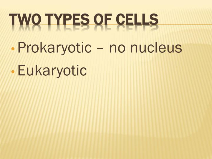 Prokaryotic – no nucleus