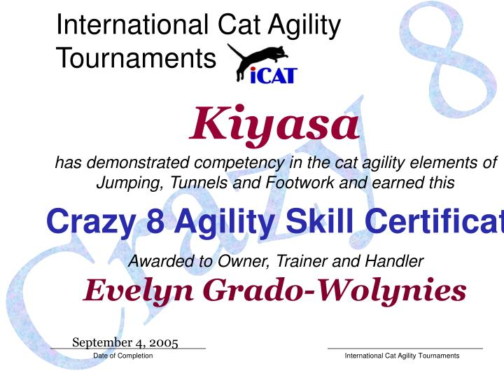 International Cat Agility Tournaments