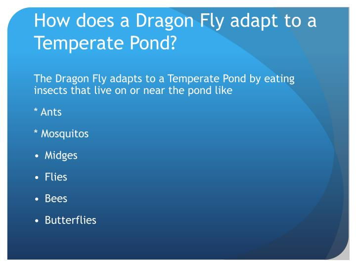 How does a Dragon Fly adapt to a Temperate Pond?