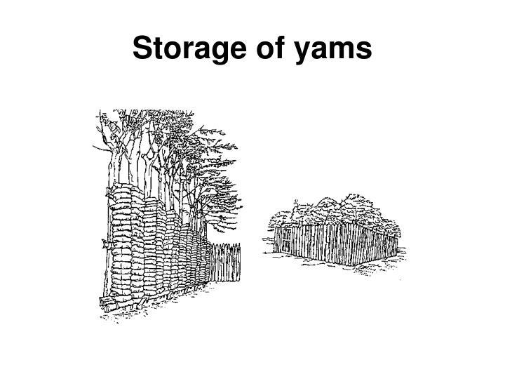 Storage of yams