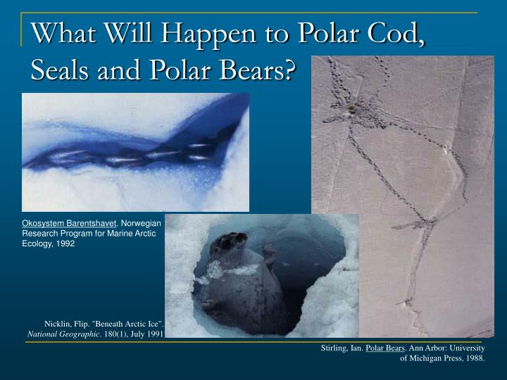 What Will Happen to Polar Cod, Seals and Polar Bears?