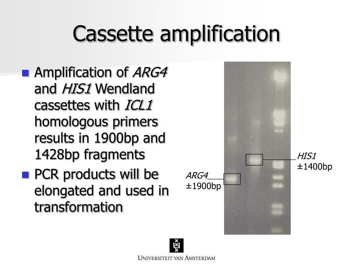 Cassette amplification
