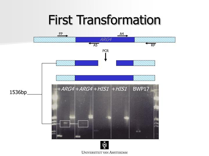 First Transformation