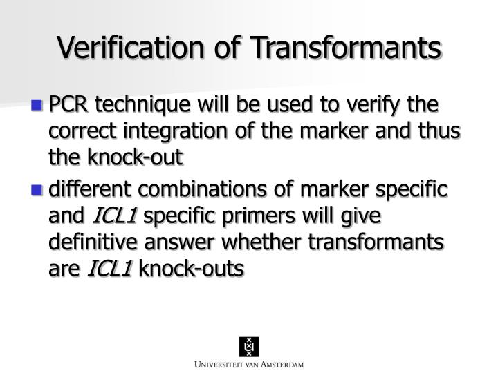 Verification of Transformants