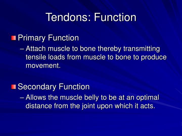 Tendons: Function