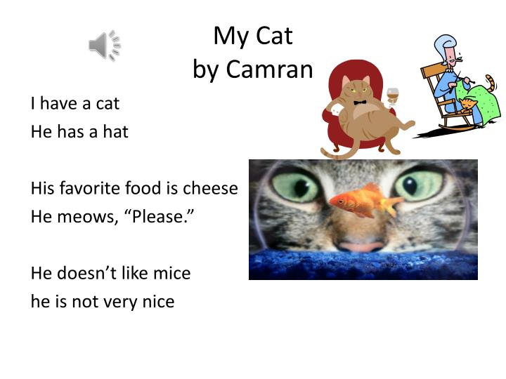 My cat by camran