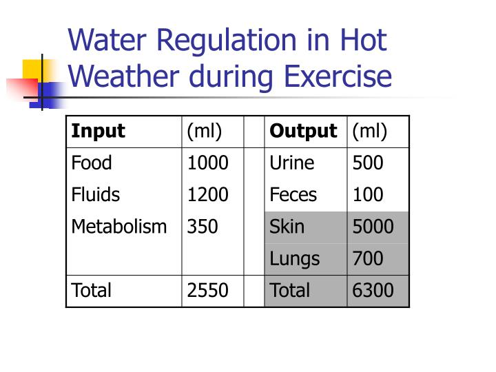 Water Regulation in Hot Weather during Exercise