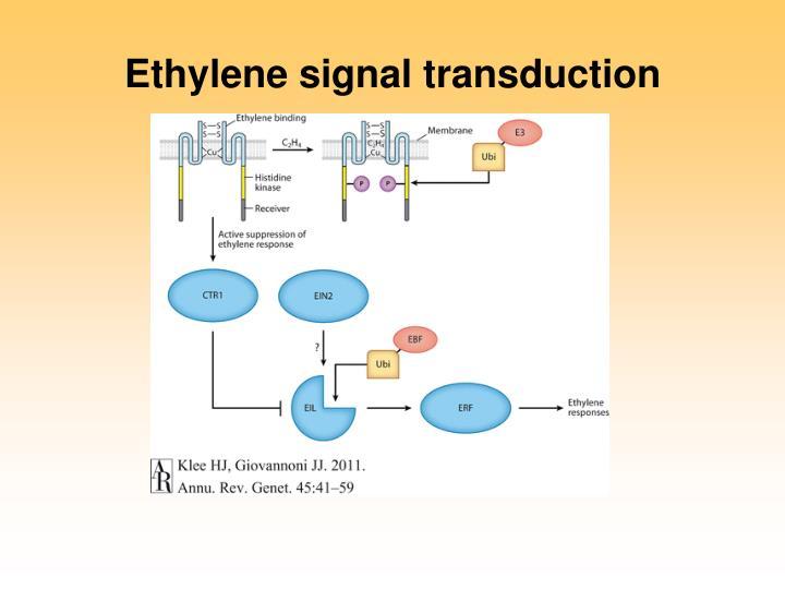 signal transduction meeting European wnt meeting 2018 in heidelberg, germany  molecular mechanisms  governing wnt signal transduction, the collaborative research.