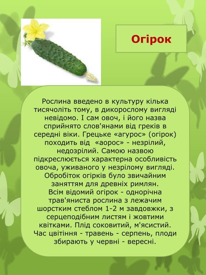 Огірок