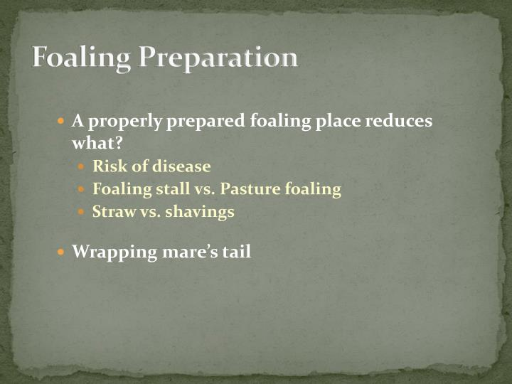 Foaling Preparation