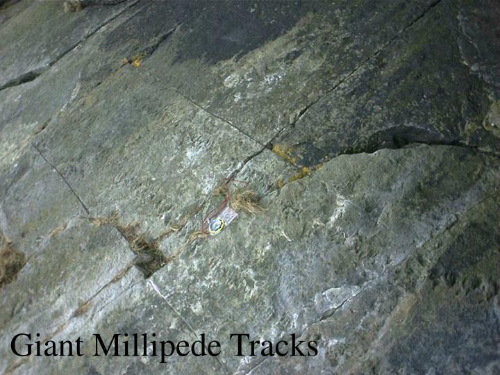 Giant Millipede Tracks