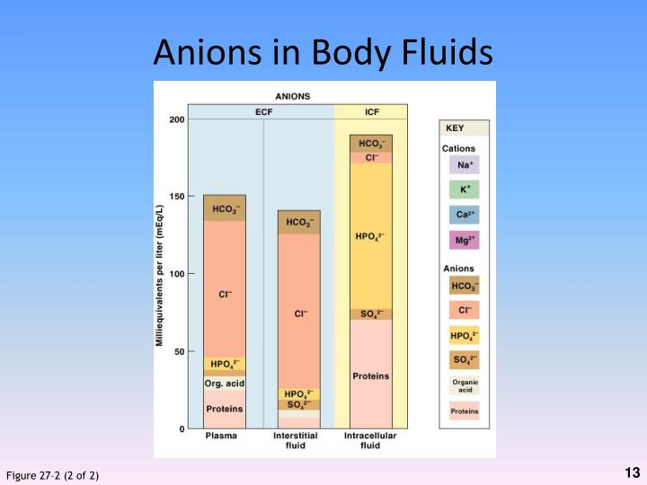 Anions in Body Fluids