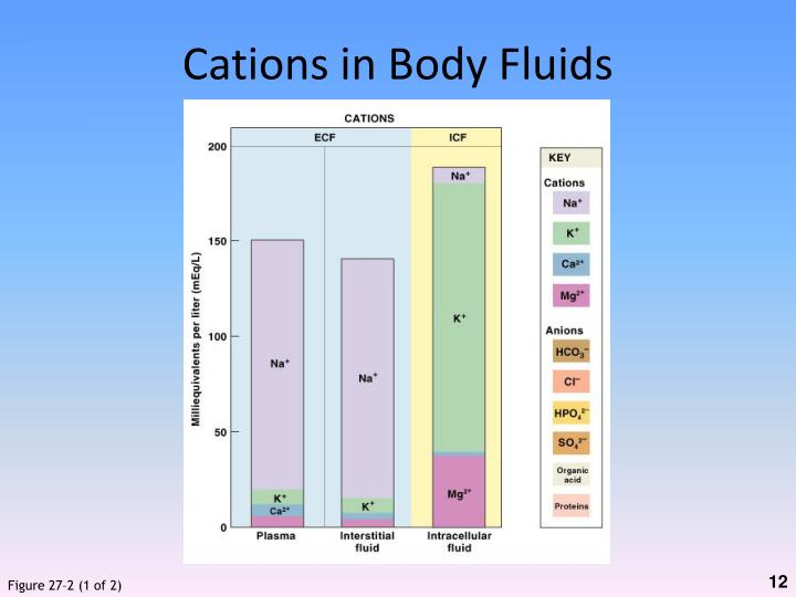 Cations in Body Fluids