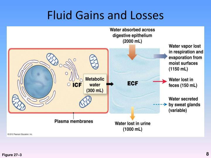 Fluid Gains and Losses