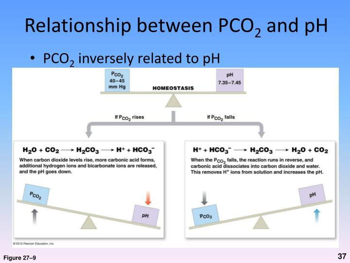 Relationship between PCO