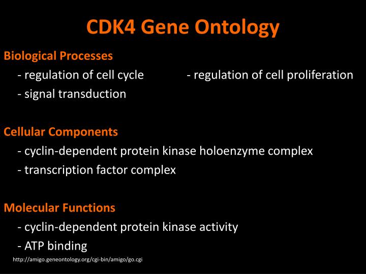 CDK4 Gene Ontology