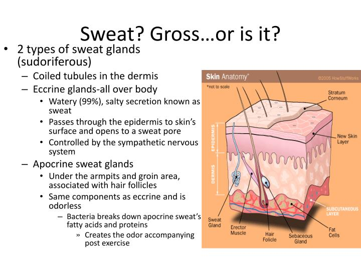 Sweat? Gross…or is it?