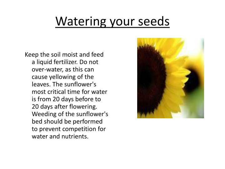 Watering your seeds
