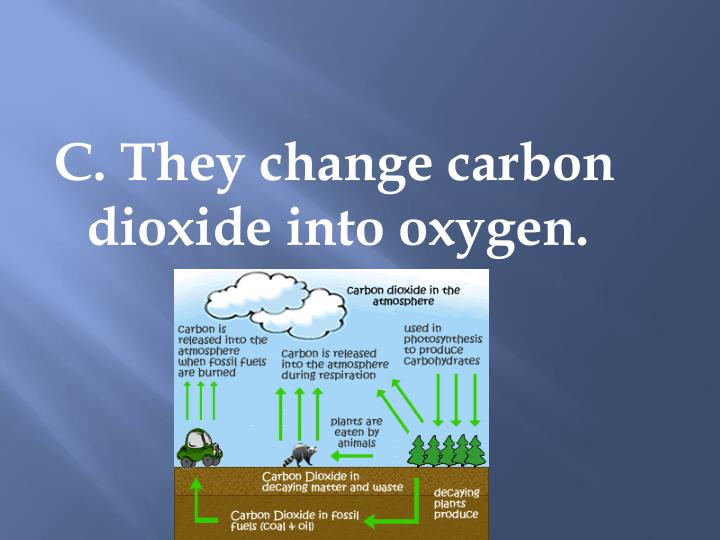 C. They change carbon dioxide into oxygen.