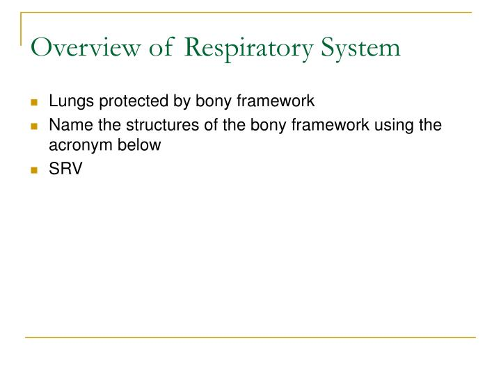 Overview of Respiratory System