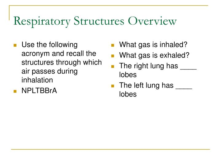 Respiratory Structures Overview