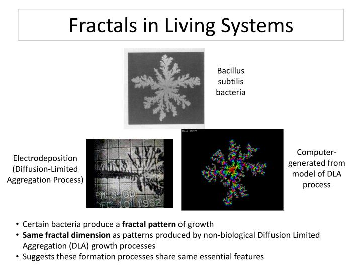 Fractals in Living Systems