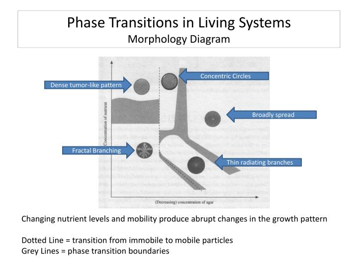 Phase Transitions in Living Systems