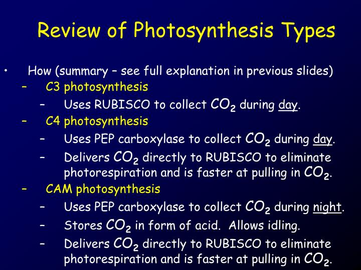 Review of Photosynthesis Types