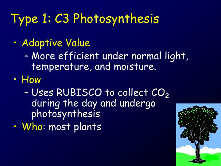 Type 1: C3 Photosynthesis