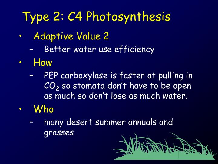 Type 2: C4 Photosynthesis
