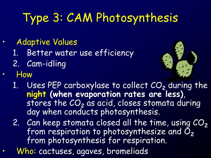 Type 3: CAM Photosynthesis