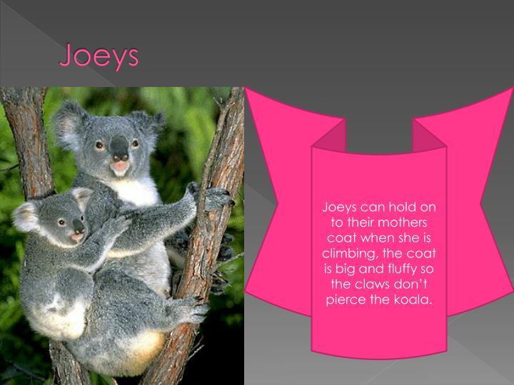 Joeys