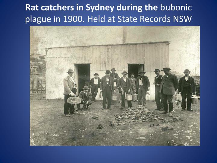 Rat catchers in Sydney during the