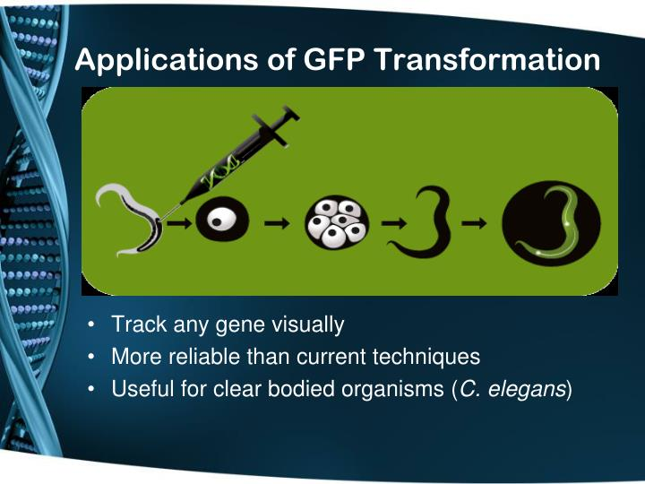 Applications of GFP Transformation