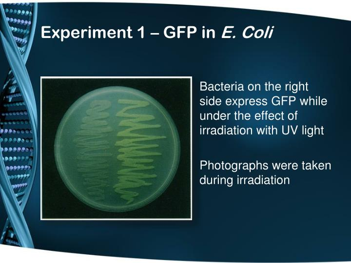 Experiment 1 – GFP in