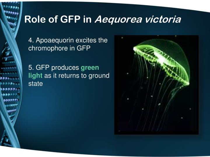 Role of gfp in aequorea victoria1