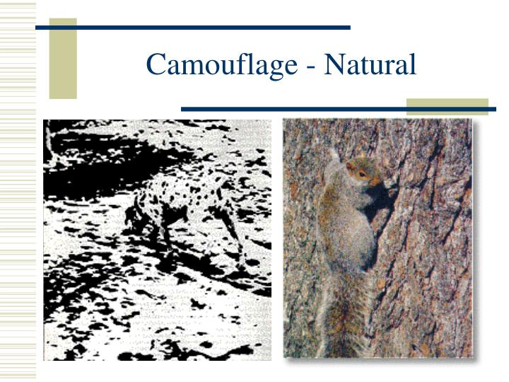 Camouflage - Natural