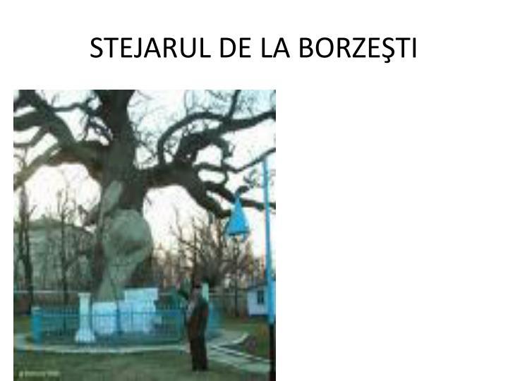 STEJARUL DE LA BORZEŞTI