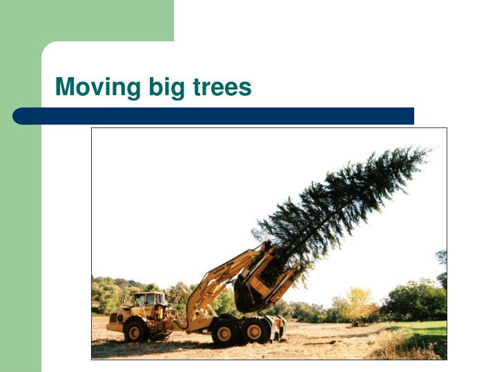 Moving big trees