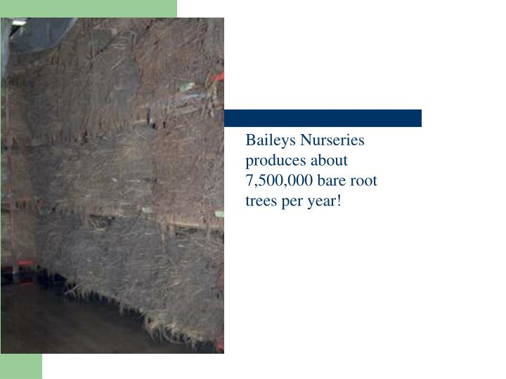 Baileys Nurseries produces about 7,500,000 bare root trees per year!