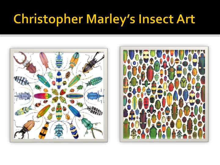 Christopher Marley's Insect Art