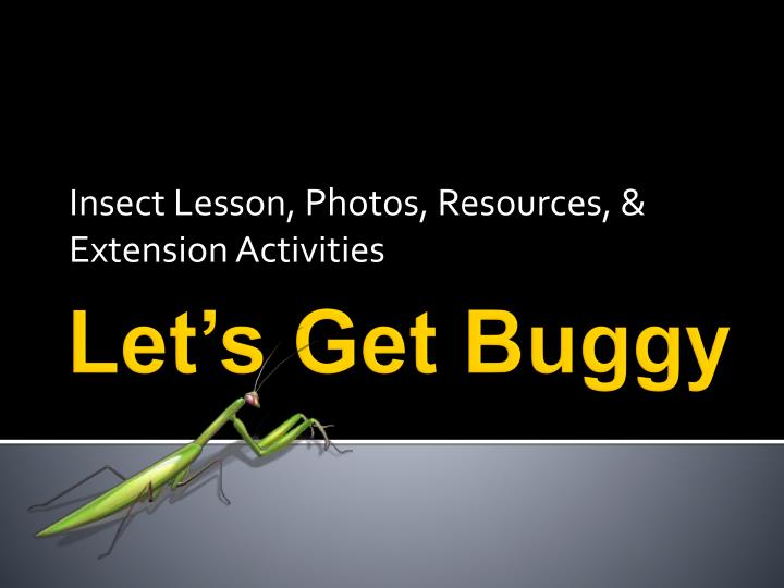Insect lesson photos resources extension activities
