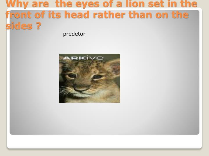 predetor
