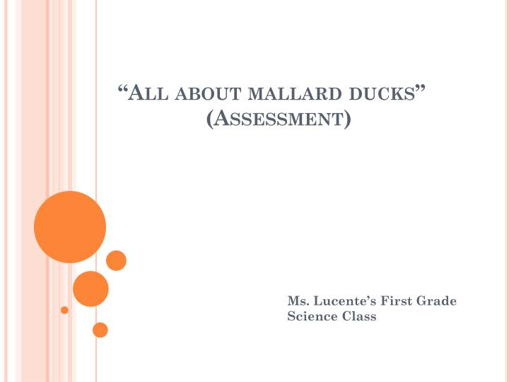 All about mallard ducks assessment