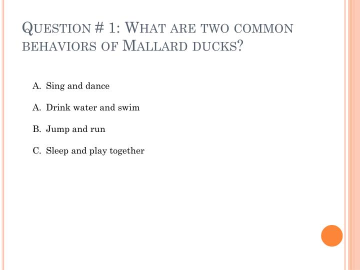 Question 1 what are two common behaviors of mallard ducks