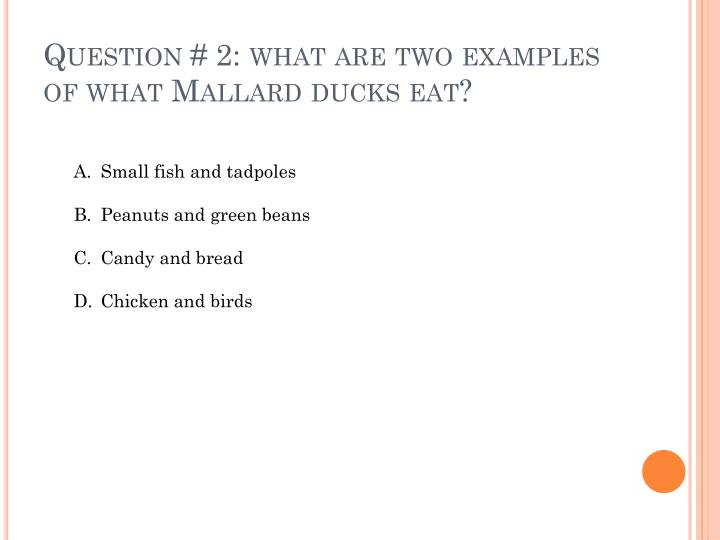 Question 2 what are two examples of what mallard ducks eat